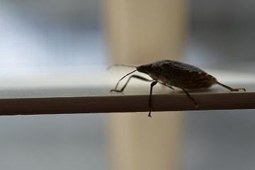 Stink Bug on window frame