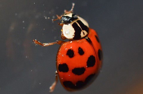 Ladybug on window