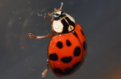 Ladybug on window