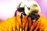 Bee on flower 2