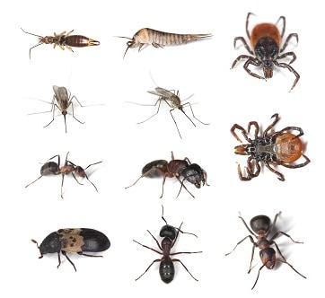 pest identification chart