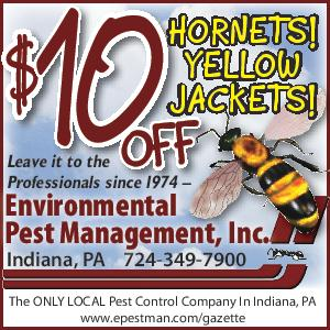 Yellow Jackets Hornets Coupon