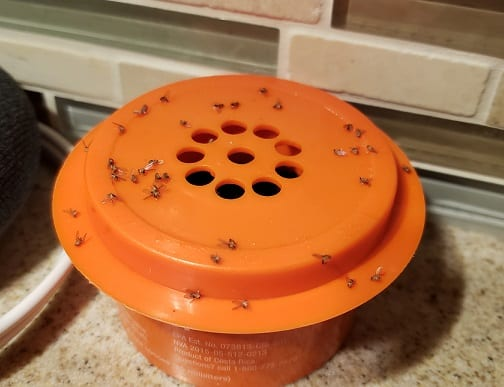 Fruit FLy Trap